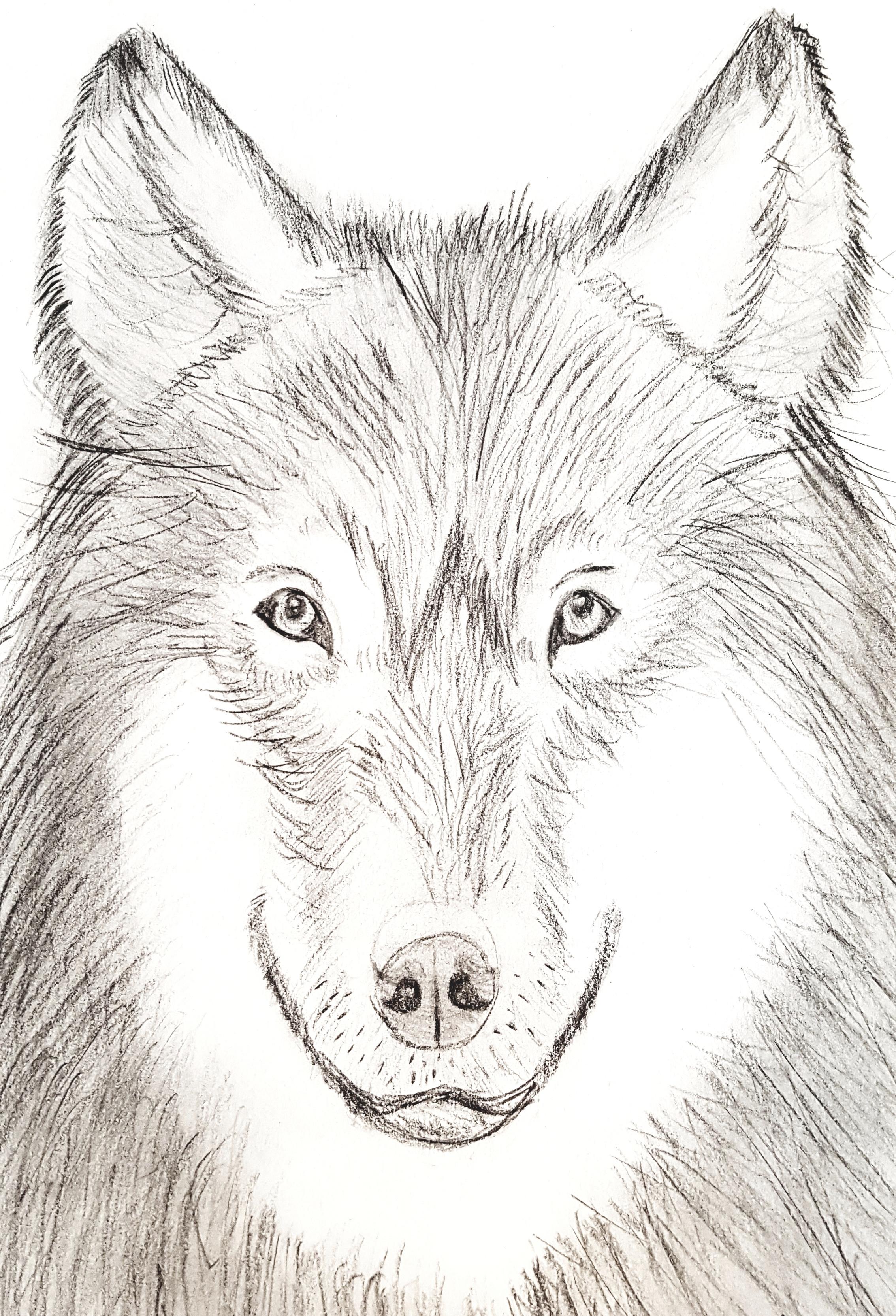 Dibujo Lobo Los Viajes De Lucy